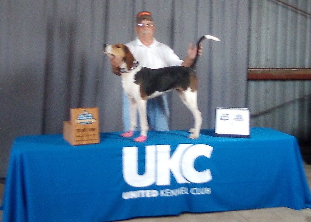 2019  Kansas Federation of Houndsmen Coonhound of the year and UKC Top 100 World Qualifier